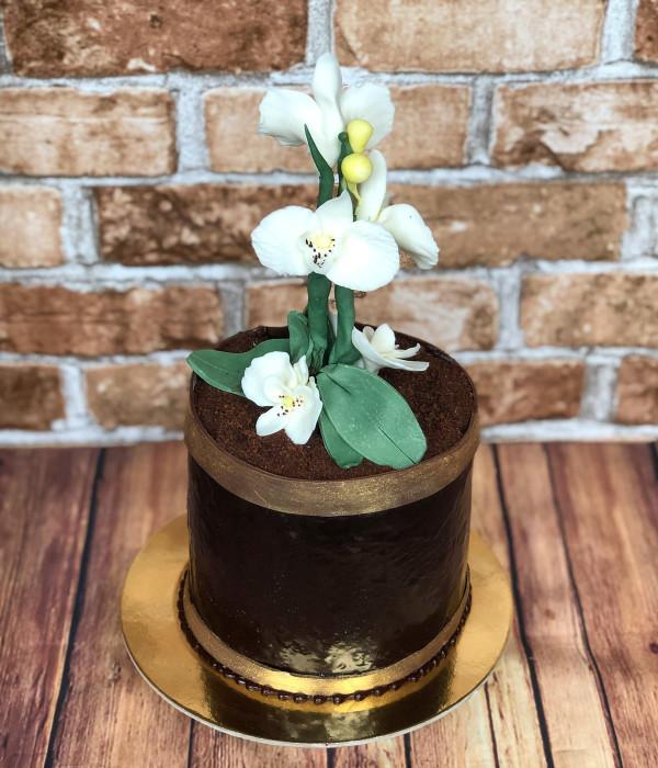 Tortas orchidėja